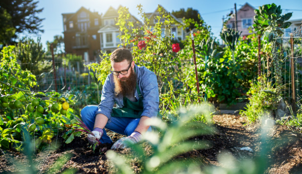 Exceptional Growing Cities: How Local Governments Can Promote Urban Farming And  Community Gardens