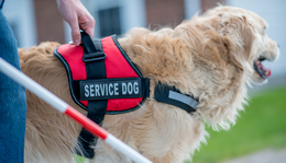 New Laws Change Rules for Service Animals